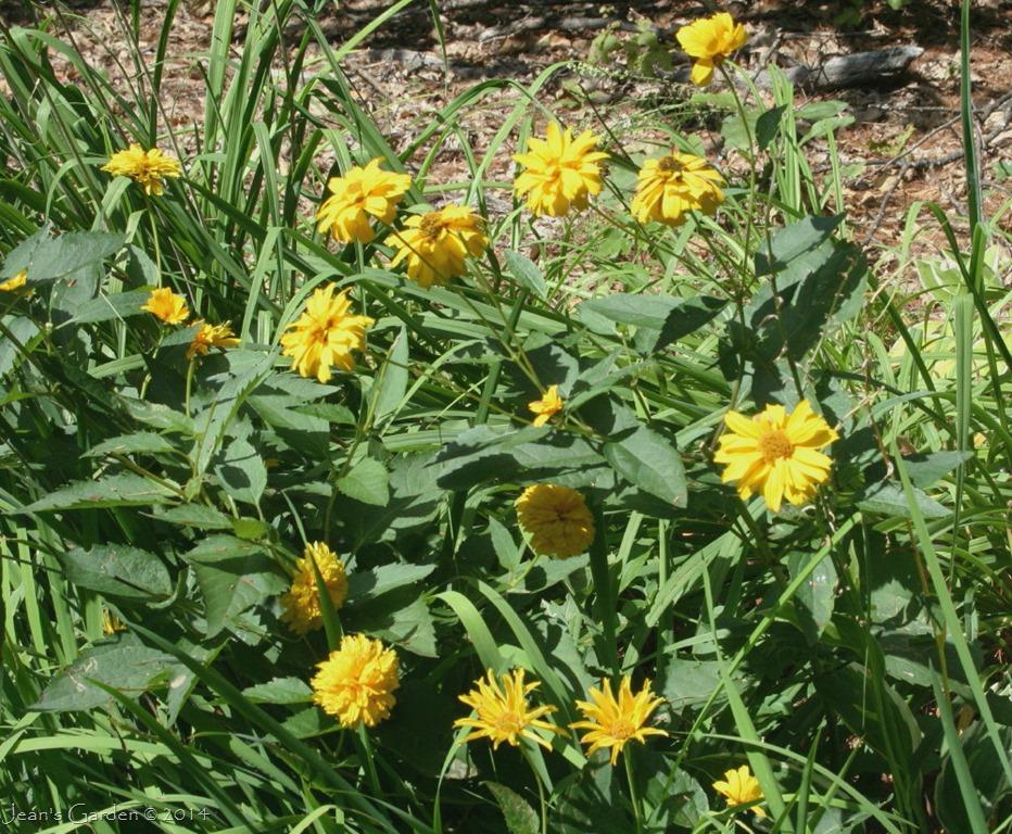 Long Blooming Perennials Jean 39 S Garden