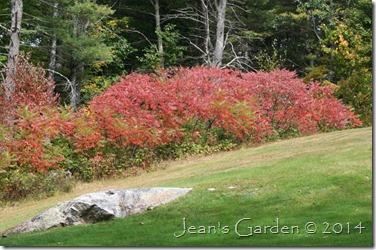 sumac fall foliage
