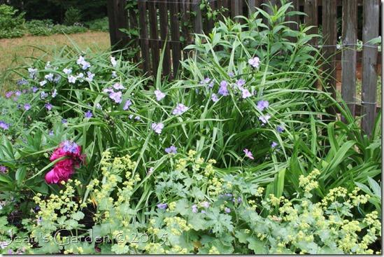 fence border inner blooms