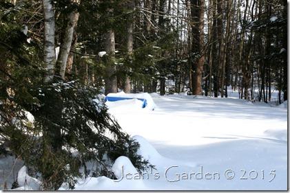 back garden in snow