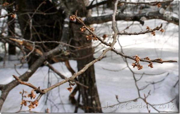 tree branch buds