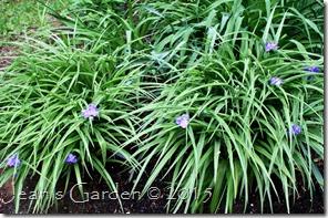 zwanenburg blooms
