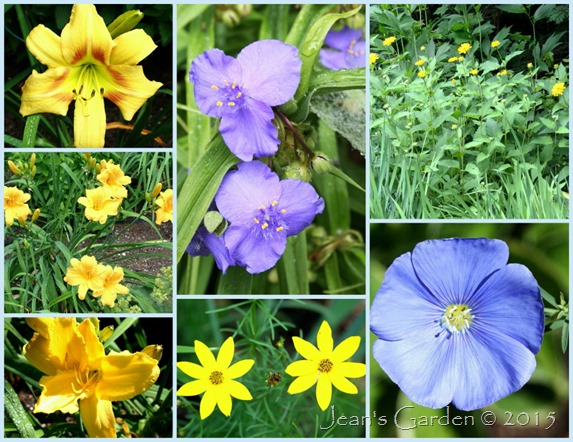 july yellows & blues