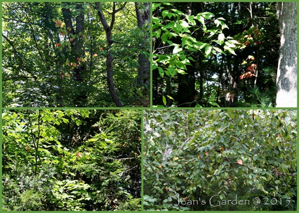1st fall foliage