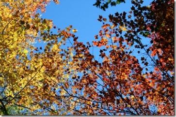 blue&gold season