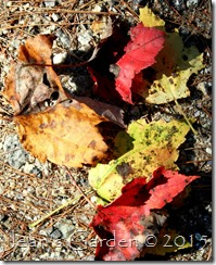 first fallen leaves