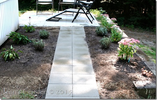 lavender walk planted