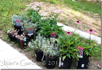 lavender walk plants