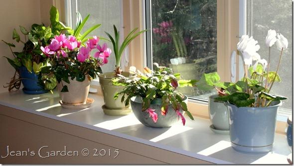 indoor garden December