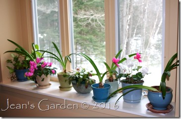 windowsill winter garden