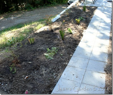 patio border planted
