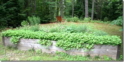 raised bed july