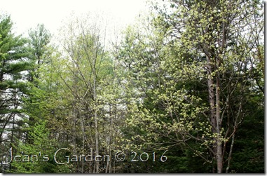 trees leafing