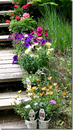 annuals on steps