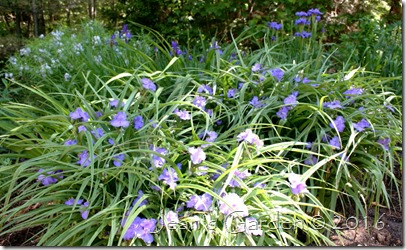 back garden blues