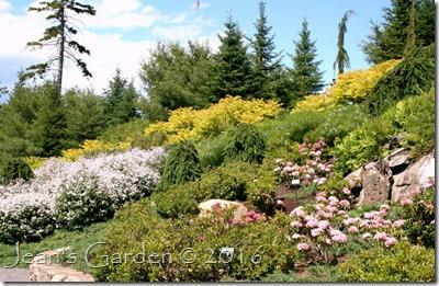CMBG hillside garden