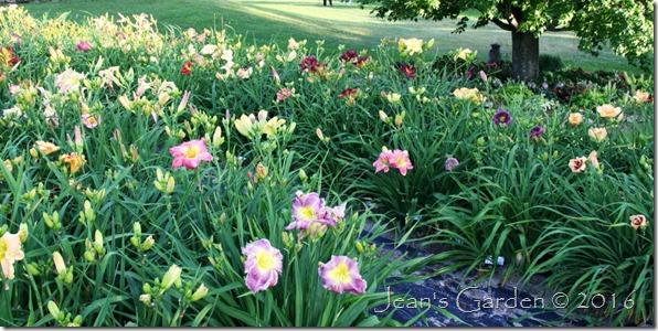 Grenier gardens daylilies