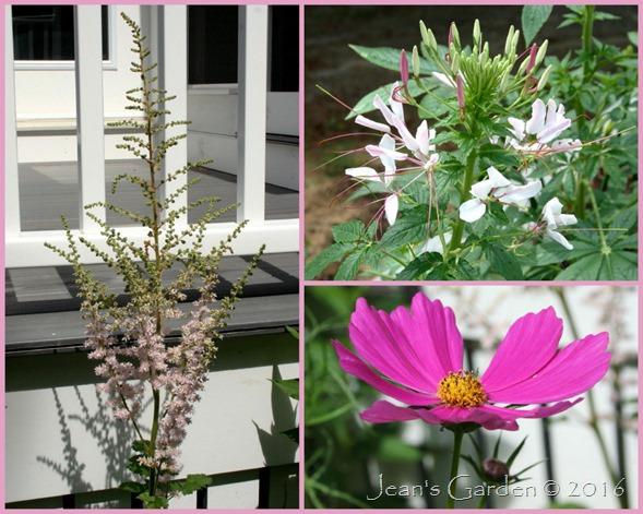 patio walkway flowers