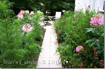 entrance garden annuals