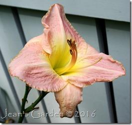 Mariska last flower