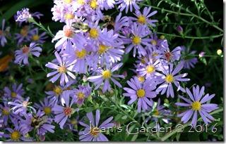 aster bluebird & bees