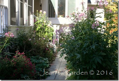 front garden october