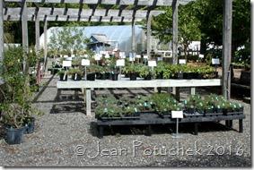 plainview plants for sale