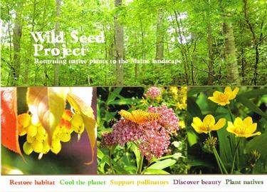 Maine wild seed