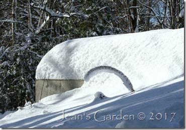 liatris snow arc