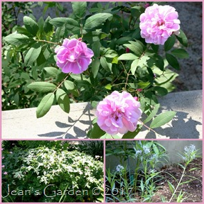 side slope june blooms