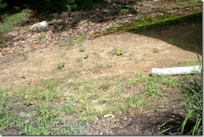 rain garden site