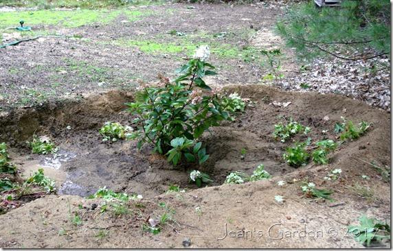 rain garden with biokovo