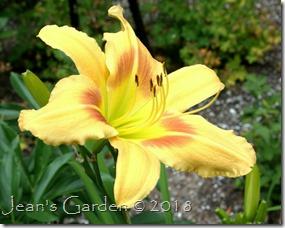Alna Pride flower