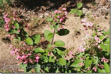 pinky winky september