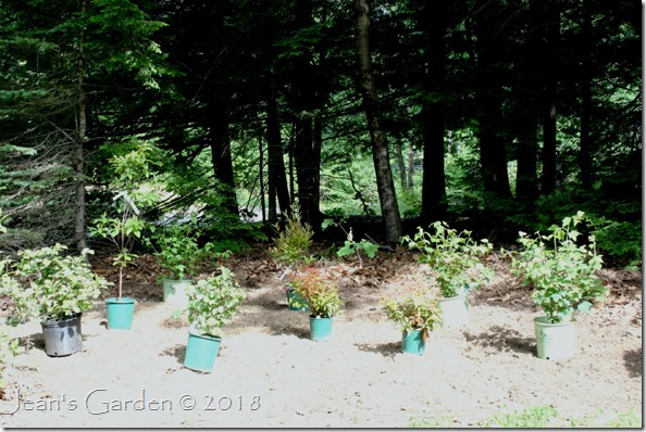 shrubbery plants