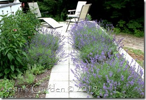lavender walk July 2017