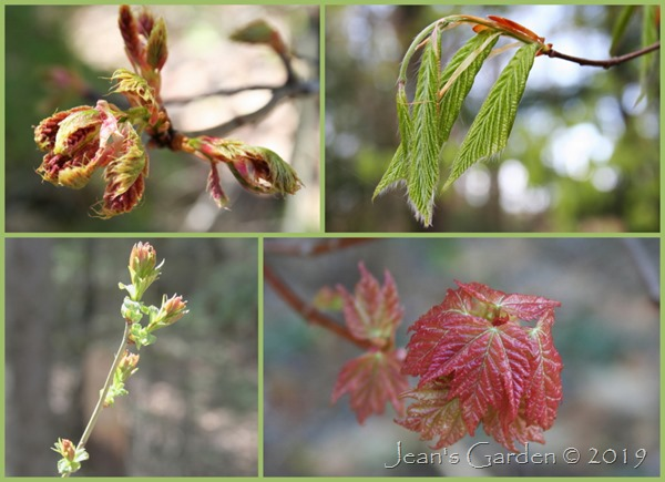 spring new leaves