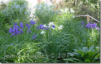 side slope irises