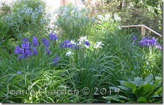 side slope irises