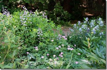 Side slope June blooms 2019