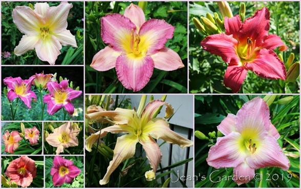 entrance garden daylilies