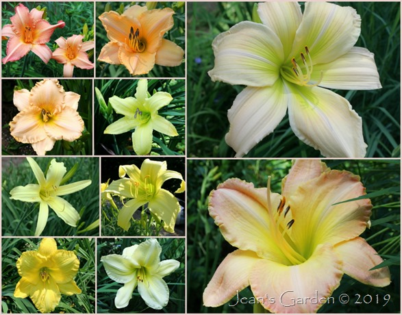 side slope daylilies