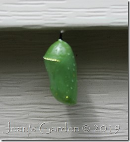 house siding chrysalis
