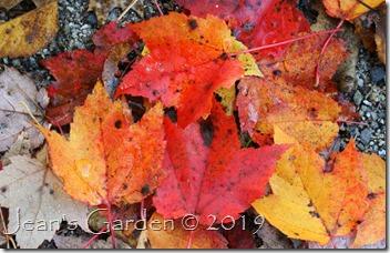 fallen leaves 2019