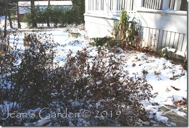 snowy garden november 2019