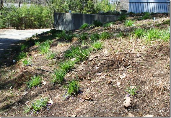side slope greenery