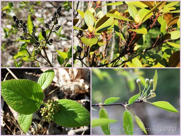 spring buds 2020