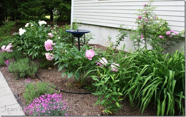 fragrant garden june 2020