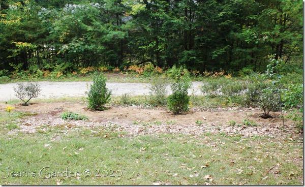 front border shrubs