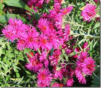 alma potschke flowers